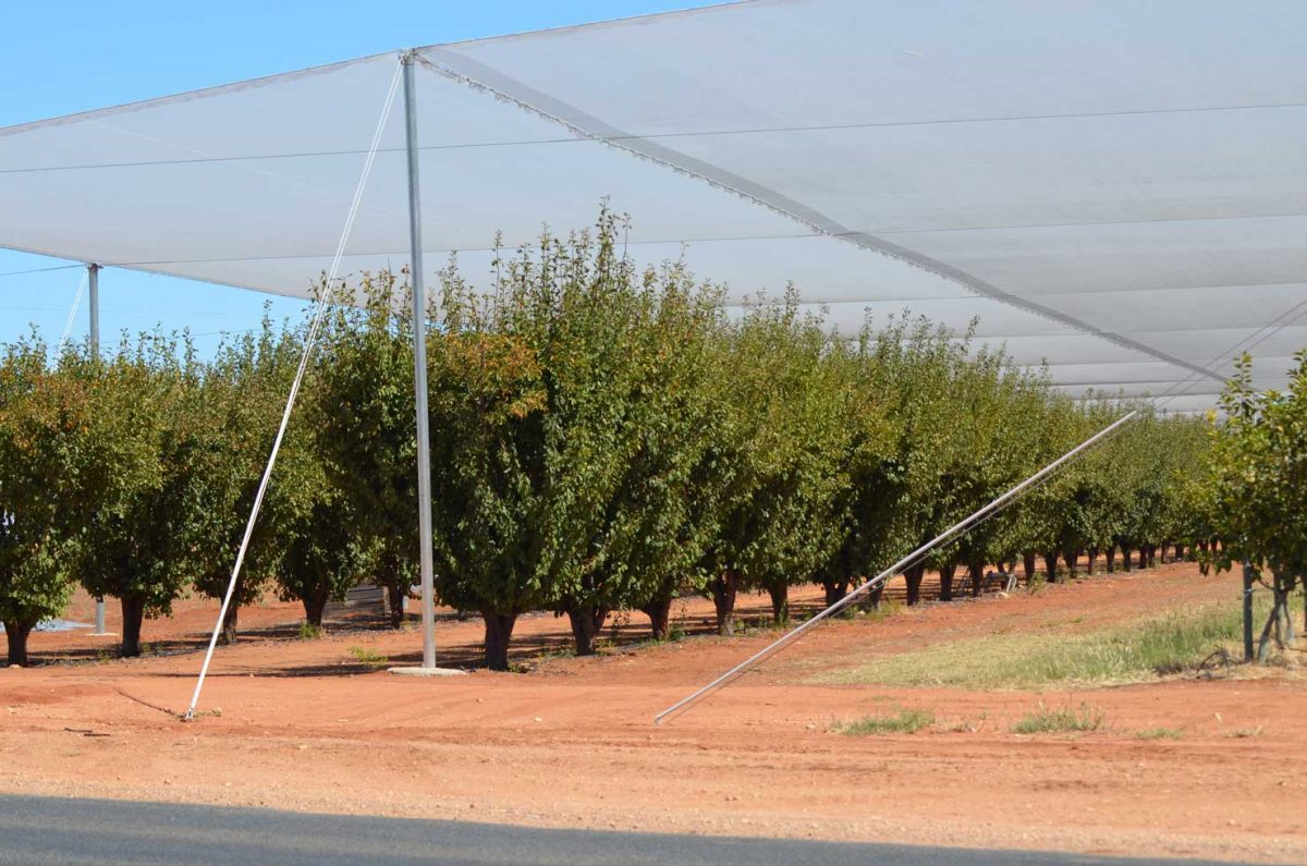 We also cater to netting contractors who are committed to producing high-quality vegetation all year round.