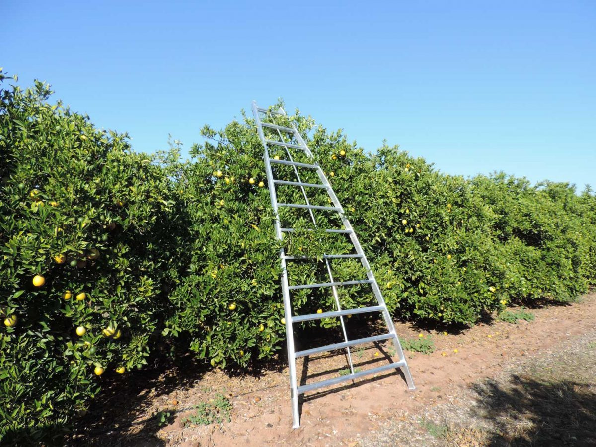 Fruit Picking Ladders Aim Sales